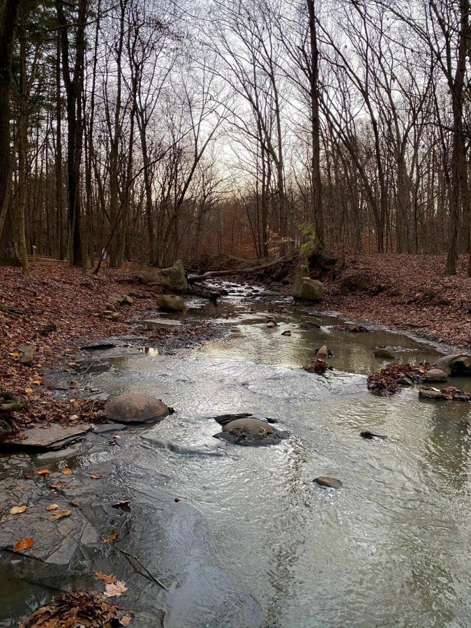 Photo of rocky stream and trees at Shale Hollow. In the stream is a broken part of a spherical shale formation.